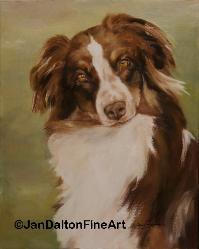 Pet Portraits Red Tri Color Australian Shepherd